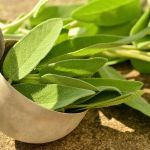 Salbei hilft gegen übermäßiges Schwitzen